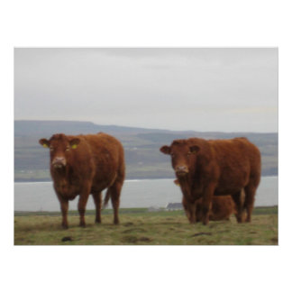 Cows Print