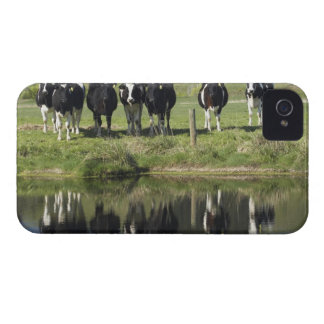 Cows reflected in canal, Henley, Taieri Plain, iPhone 4 Case-Mate Case