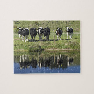 Cows reflected in canal, Henley, Taieri Plain, Jigsaw Puzzle