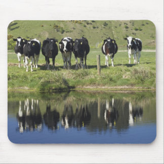 Cows reflected in canal, Henley, Taieri Plain, Mousepad