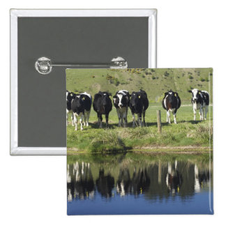 Cows reflected in canal, Henley, Taieri Plain, Pinback Button