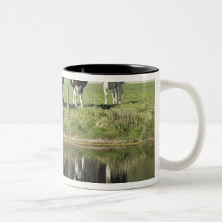 Cows reflected in canal, Henley, Taieri Plain, Two-Tone Coffee Mug