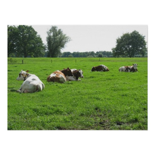 Cows Resting in Green Summer Meadow Poster Print