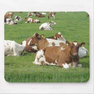 Cows Resting Photo Gift Mousepad