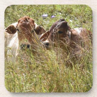 COWS RURAL QUEENSLAND AUSTRALIA DRINK COASTER