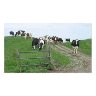 Cows Small Photo Business Cards