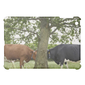 Cows standing face to face behind tree cover for the iPad mini