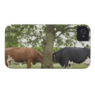 Cows standing face to face behind tree iPhone 4 cases