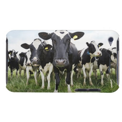 Cows standing in a row looking at camera iPod touch case