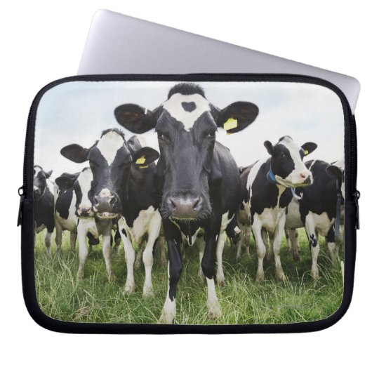 Cows standing in a row looking at camera computer sleeve