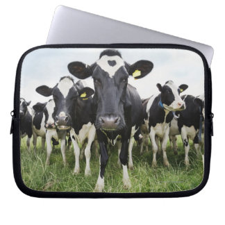 Cows standing in a row looking at camera computer sleeves