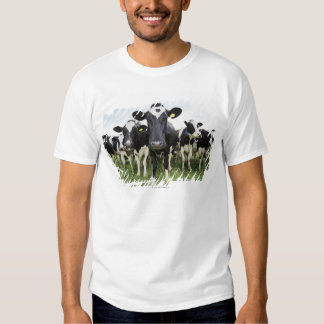 Cows standing in a row looking at camera shirt