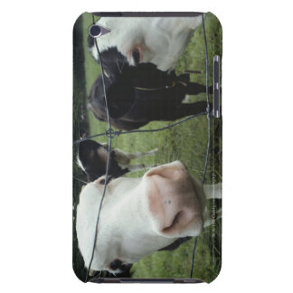Cows standing in grass pasture, Nova Scotia, Barely There iPod Cover