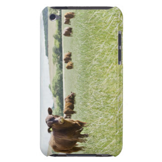 Cows standing in meadow iPod touch cases