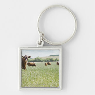 Cows standing in meadow keychain