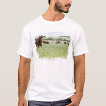 Cows standing in meadow T-Shirt
