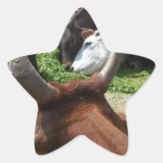 Cows Taking Green Grass Star Sticker