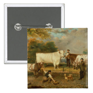 Cows with a herdsman pinback button