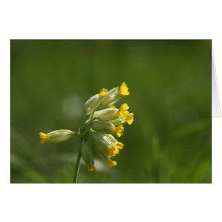 Cowslip común (veris del Primula) Tarjeta De Felicitación