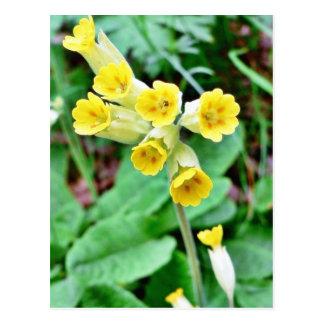 Cowslip Flower Postcard