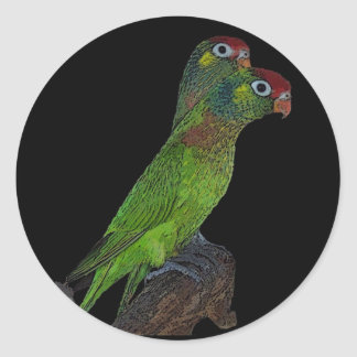 Coxs Fig Parrots Classic Round Sticker