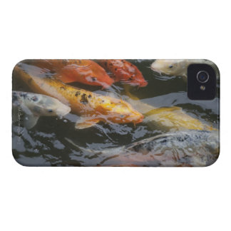 Coy Fish iPhone 4 Cover
