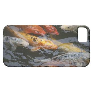 Coy Fish iPhone SE/5/5s Case