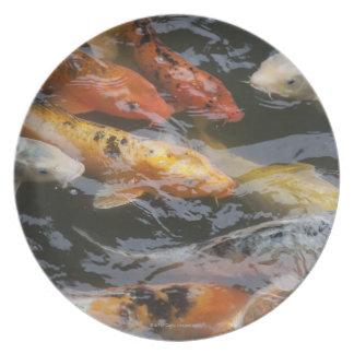 Coy Fish Melamine Plate