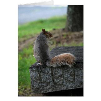 Coy Squirrel Card