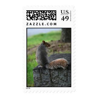 Coy Squirrel Postage