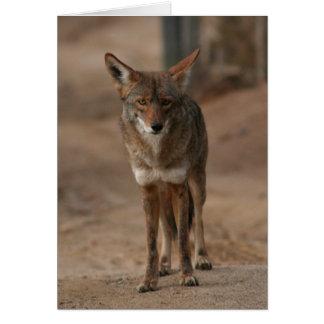 Coyote 003 card