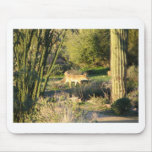 Coyote_at_dawn Mouse Pad
