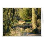 Coyote_at_dawn Postcard Greeting Card