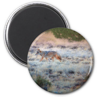 Coyote at dusk 2 inch round magnet