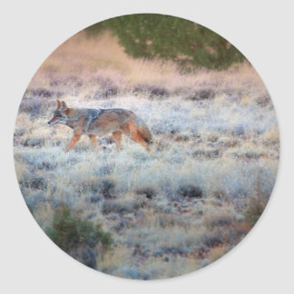 Coyote at dusk classic round sticker
