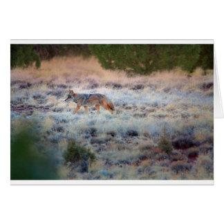 Coyote at dusk greeting card