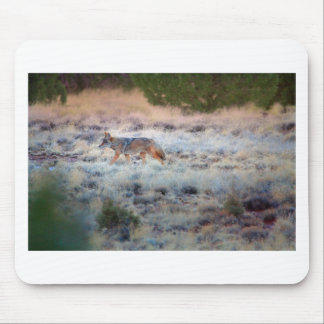 Coyote at dusk mouse pad
