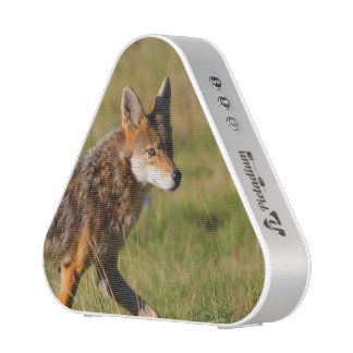 coyote bluetooth speaker