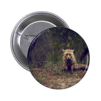 Coyote 2 Inch Round Button