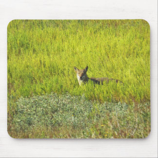 Coyote by Leslie Peppers Mouse Pad