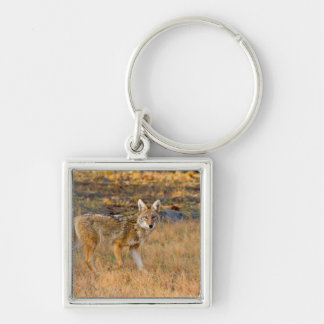 Coyote (Canis Latrans) Hunting Keychain