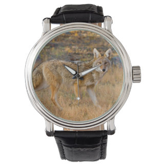 Coyote (Canis Latrans) Hunting Wrist Watch