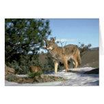Coyote Card