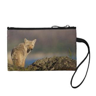 coyote coin purse