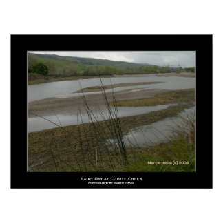 """Coyote Creek Rainy Day"" Print"