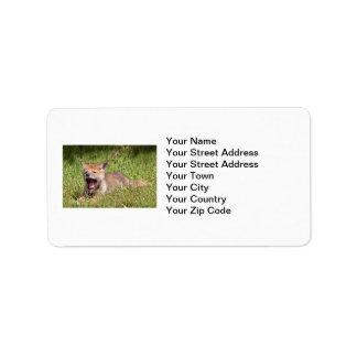 Coyote del bebé que bosteza etiquetas de dirección