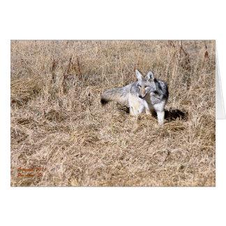 Coyote del parque de Yellowstone Felicitación