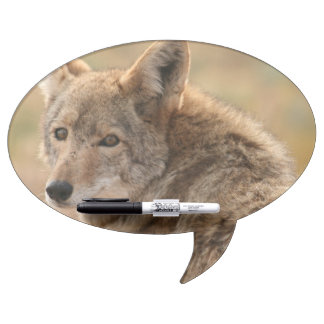 Coyote Dry Erase Whiteboards