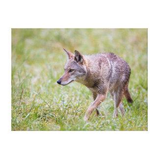 Coyote en el campo, ensenada de Cades Lona Estirada Galerías