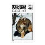 Coyote en nieve